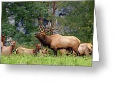 The Bugling Bull Elk Greeting Card