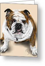 The Bull Dog Pup Greeting Card