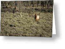 The Bull Elk Greeting Card