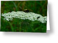 The Bumblebee And The Fly Greeting Card