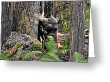 The Burly Bear Cub Close1 - Muir Woods National Monument - Marin County California Greeting Card
