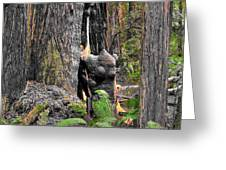 The Burly Bear Cub - Muir Woods National Monument - Marin County California Greeting Card