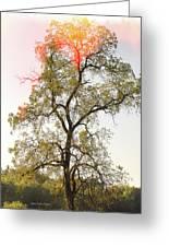 The Burning Tree Greeting Card