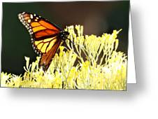 The Butterfly 2 Greeting Card