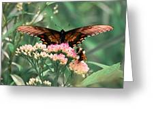 The Butterfly And The Bumblebee Greeting Card