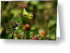 The Butterfly Dance-4 Greeting Card