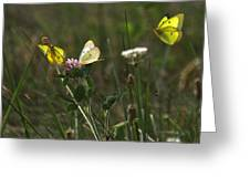 The Butterfly Dance Greeting Card