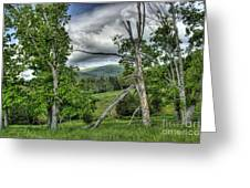 The Buzzard Trees Greeting Card