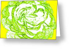 The Cabbage Rose Greeting Card