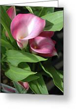 The Calla Lily Greeting Card