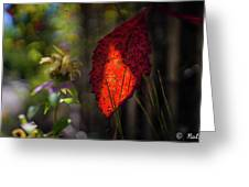The Calling Of Fall Greeting Card