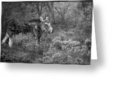 The Calm Of A Moose Bw Greeting Card