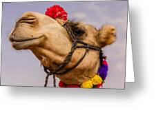 The Camel Beauty Greeting Card