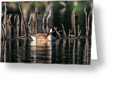 The Canada Goose Greeting Card