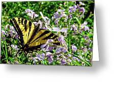 The Canadian Tiger Swallowtail Greeting Card