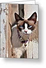 The Cat A Purrfect Carnivore Greeting Card by Christine Till