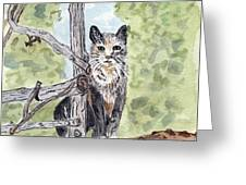 The Cat At The Fence Greeting Card