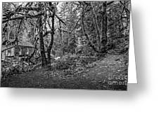 The Cedar Creek Mill Trail Greeting Card