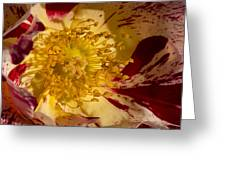 The Center Of A Rose Greeting Card
