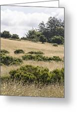 The Central Coast In May Greeting Card