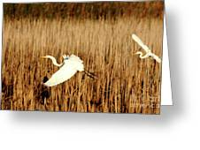 The Chase Began Greeting Card
