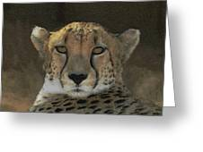 The Cheetah Greeting Card