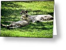 The Cheetahs Greeting Card