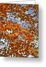 The Color Of Fall 1 Greeting Card