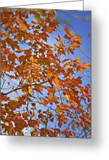 The Color Of Fall 2 Greeting Card
