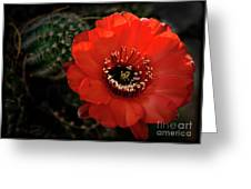 The Color Red Always Makes Smile Greeting Card
