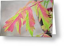 The Colors Of Shumac 2 Greeting Card
