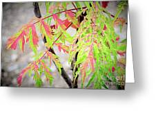 The Colors Of Shumac 3 Greeting Card