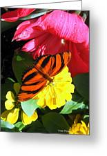 The Colors Of Summer Greeting Card by Trina Prenzi