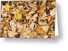 The Colors Of The Leaves In Autumn Greeting Card