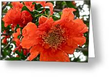 The Colour Orange Greeting Card