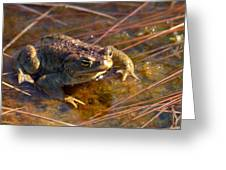 The Common Toad 1 Greeting Card