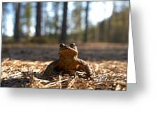 The Common Toad 3 Greeting Card