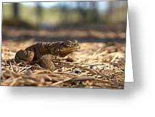 The Common Toad 4 Greeting Card