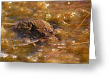 The Common Toads 2 Greeting Card