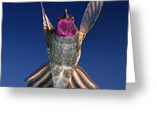 The Conductor Of Hummer Air Orchestra Greeting Card