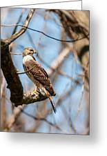 The Cooper's Hawk Greeting Card