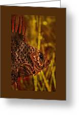 The Copper Rockfish Greeting Card