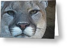 The Cougar 3 Greeting Card