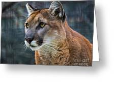 The Cougar Greeting Card
