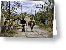 The Cow Herder Greeting Card