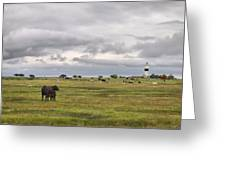 The Cows Of Ottenby 1 Greeting Card