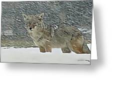 The Coyote Greeting Card