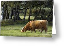 The Creature Of New Forest Greeting Card