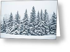 The Crown Of Winter Greeting Card