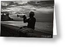 The Cuban Trumpeter 1 Greeting Card